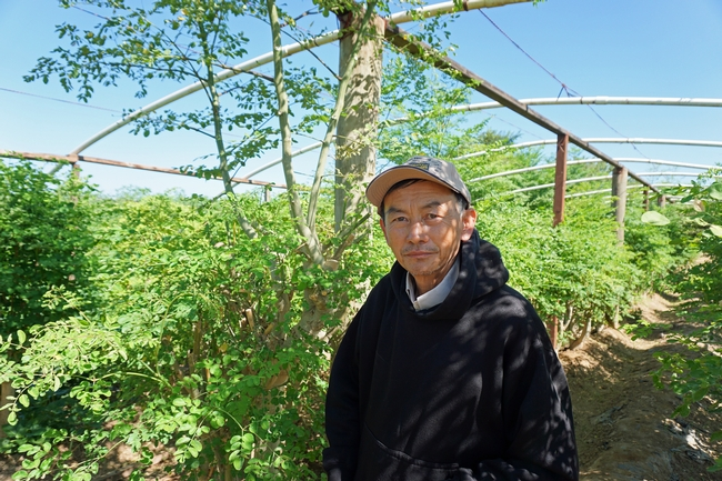 Fresno's Southeast Asian Farmers Are On Trend With New 'Superfood' Moringa - The Vine