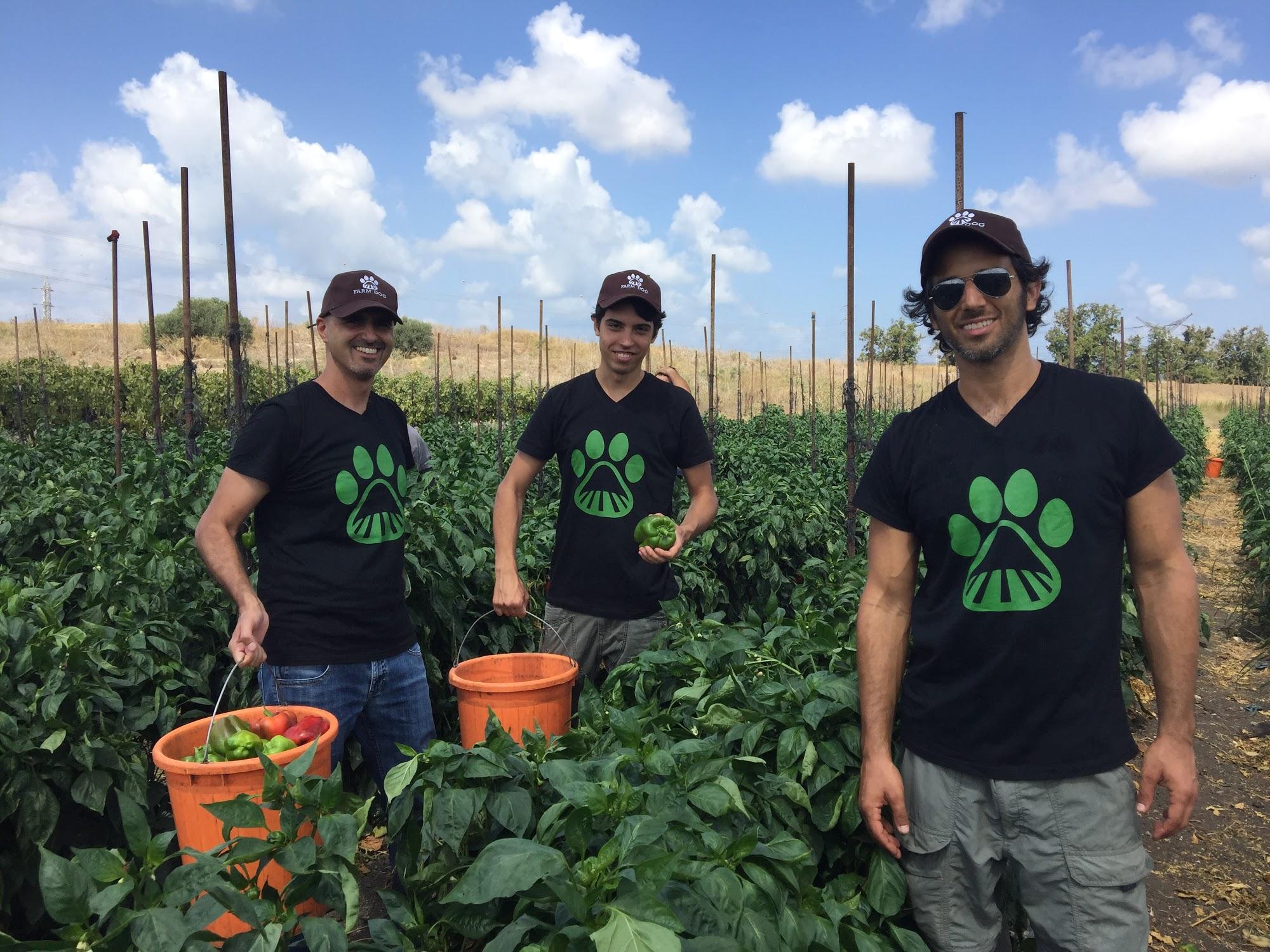 Farm Dog: A Farmer's Best Digital Friend for Integrated Pest Management