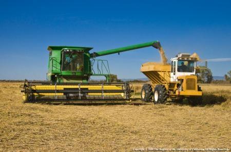 Pests and pathogens place global burden on major food crops - The Vine