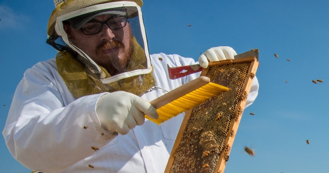 U.S. honey industry contributes more than $4.7 billion to economy, according to Ag Issues Center report - The Vine